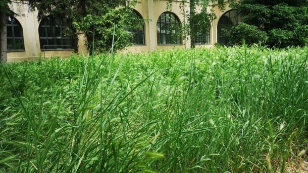 Panaszláda: benőtte a gaz az Alföldi Galéria udvarát