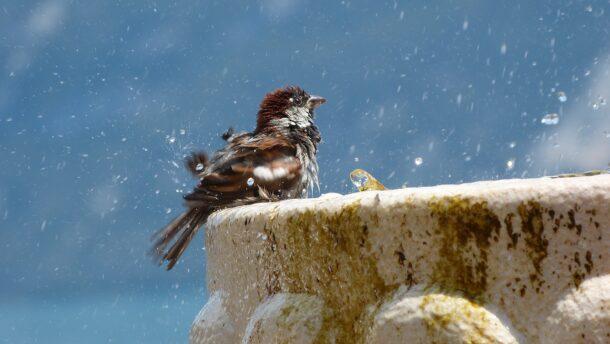madár-szökőkút